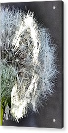 Ring Of Light Acrylic Print by Teresa Dixon