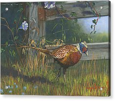 Ringneck Pheasant Acrylic Print by Jeff Brimley
