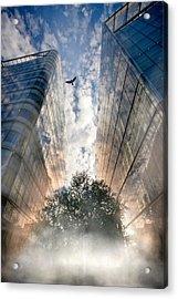 Rise Acrylic Print by Richard Piper