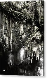 River Branch Acrylic Print by Steven Sparks