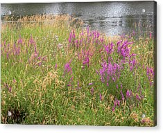 River Flowers Acrylic Print by Fred Russell