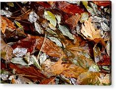 River Leaves Acrylic Print by LeeAnn McLaneGoetz McLaneGoetzStudioLLCcom