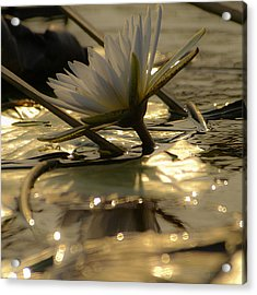 River Lily Acrylic Print