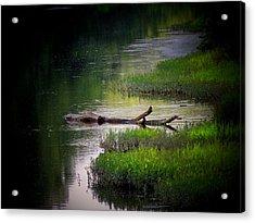 River Log Acrylic Print by Michael L Kimble