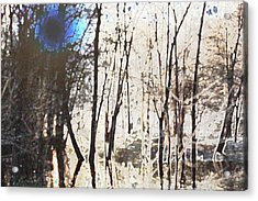 Acrylic Print featuring the photograph River Trees by Donna  Smith