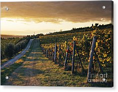 Road Through Vineyard Acrylic Print by Jeremy Woodhouse
