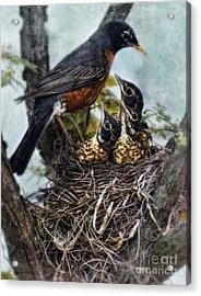 Robin And Babies In Nest Acrylic Print by Jill Battaglia