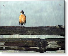 Acrylic Print featuring the photograph Robin In The Mist. by I'ina Van Lawick