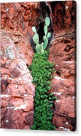 Rock And Cactus Acrylic Print by Barry Shaffer