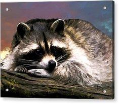 Rocky Raccoon Acrylic Print by Robert Smith