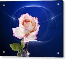 Romance Rose Acrylic Print by M K  Miller