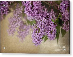Romantic Lilac Acrylic Print
