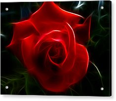 Romantic Red Rose Acrylic Print by Cindy Wright