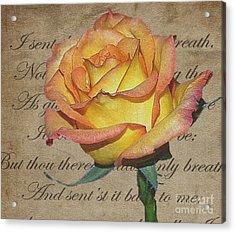 Romantic Rose Acrylic Print