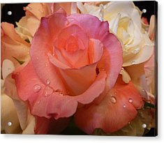 Romantic Roses And Raindrops Acrylic Print by Cindy Wright