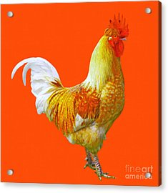 Rooster 3 - Painterly Acrylic Print by Wingsdomain Art and Photography