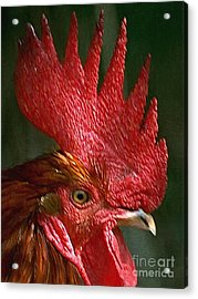 Rooster - Painterly Acrylic Print by Wingsdomain Art and Photography