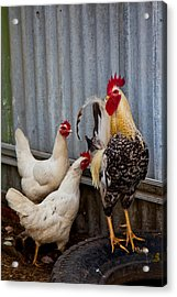 Rooster Rules Some Acrylic Print