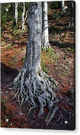 Rooted To The Spot Acrylic Print