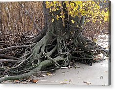 Acrylic Print featuring the photograph Roots 002 by Dorin Adrian Berbier