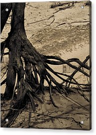 Roots Acrylic Print by Odd Jeppesen