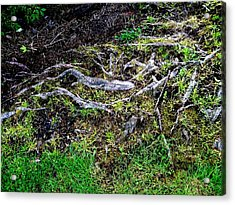 Roots Acrylic Print by Randall Weidner