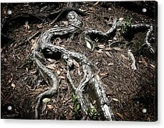 Roots Acrylic Print by Shane Rees