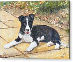 Rory Border Collie Puppy Acrylic Print