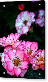 Rose 121 Acrylic Print by Pamela Cooper
