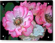 Rose 129 Acrylic Print by Pamela Cooper