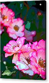 Rose 130 Acrylic Print by Pamela Cooper