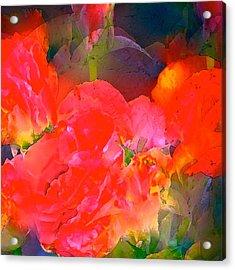 Rose 144 Acrylic Print by Pamela Cooper