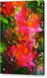 Rose 147 Acrylic Print by Pamela Cooper