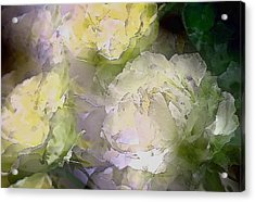 Rose 151 Acrylic Print by Pamela Cooper