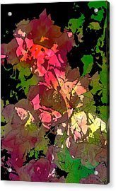 Rose 153 Acrylic Print by Pamela Cooper