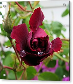 Rose 4x4 Acrylic Print