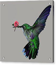 Rose Baring Bird Acrylic Print by Carly Ralph