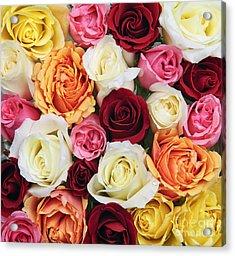 Rose Blossoms Acrylic Print by Elena Elisseeva