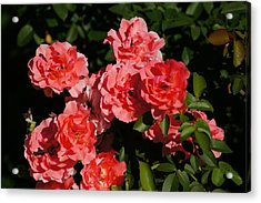 Rose Bouquet Acrylic Print by Bj Hodges