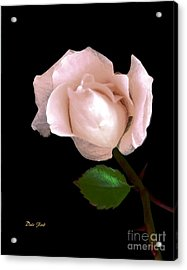 Acrylic Print featuring the photograph Rose Bud by Dale   Ford