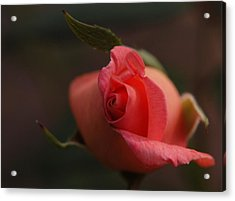 Rose Bud One Acrylic Print by Wanda Brandon