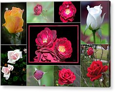 Acrylic Print featuring the photograph Rose Collage 001 by George Bostian
