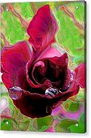 Rose Contours Acrylic Print