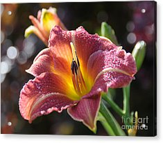 Rose Day Lily Acrylic Print