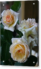 Acrylic Print featuring the photograph Rose by Denise Moore