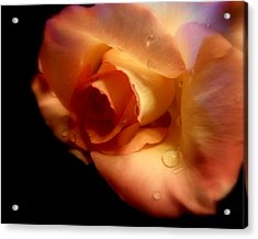 Rose Drops Acrylic Print by Cindy Wright