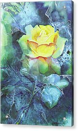Rose Acrylic Print by Eunice Olson