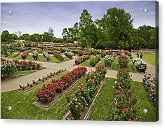 Rose Garden Park Acrylic Print by M K  Miller