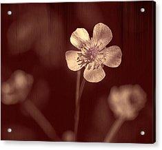 Rose Grain Wildflower Acrylic Print by Bill Tiepelman