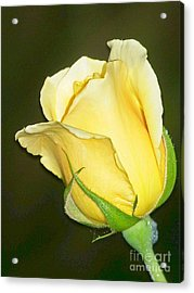 Rose Jaune Acrylic Print by Sylvie Leandre